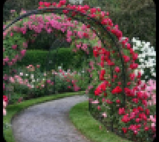 Садовые цветы какие цветы посадить на