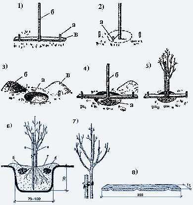 Плодовые деревья какие лучше сажать 808