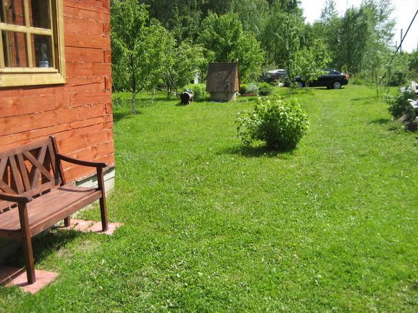 Фото газон своими руками на даче