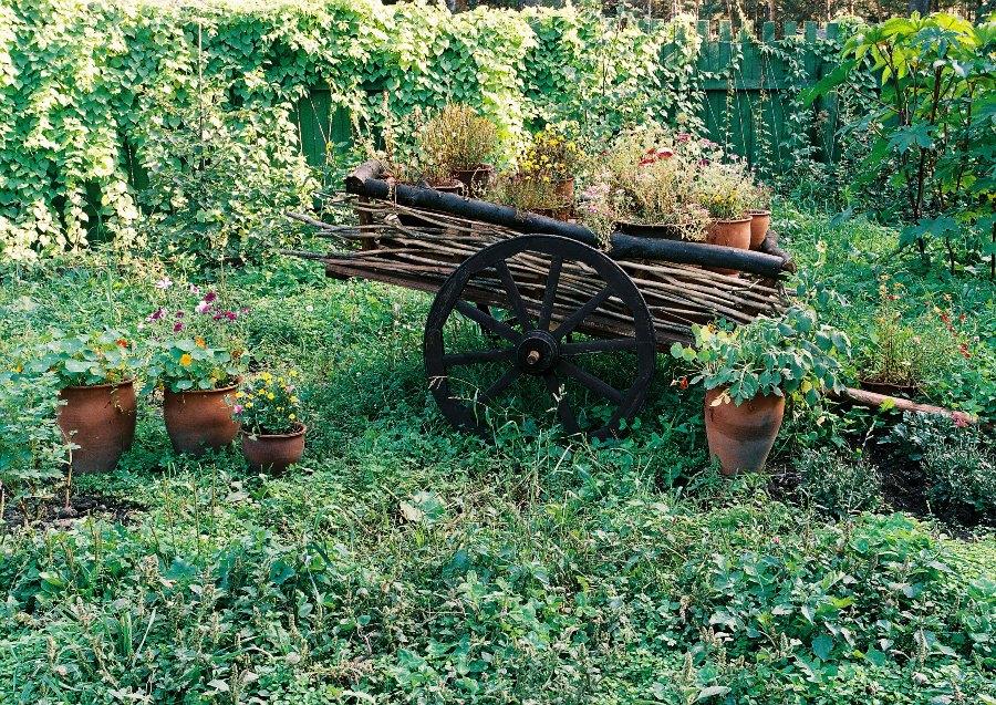 Дачного участка современный сад