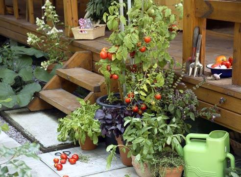 Сад и своими руками не как у всех интересные идеи
