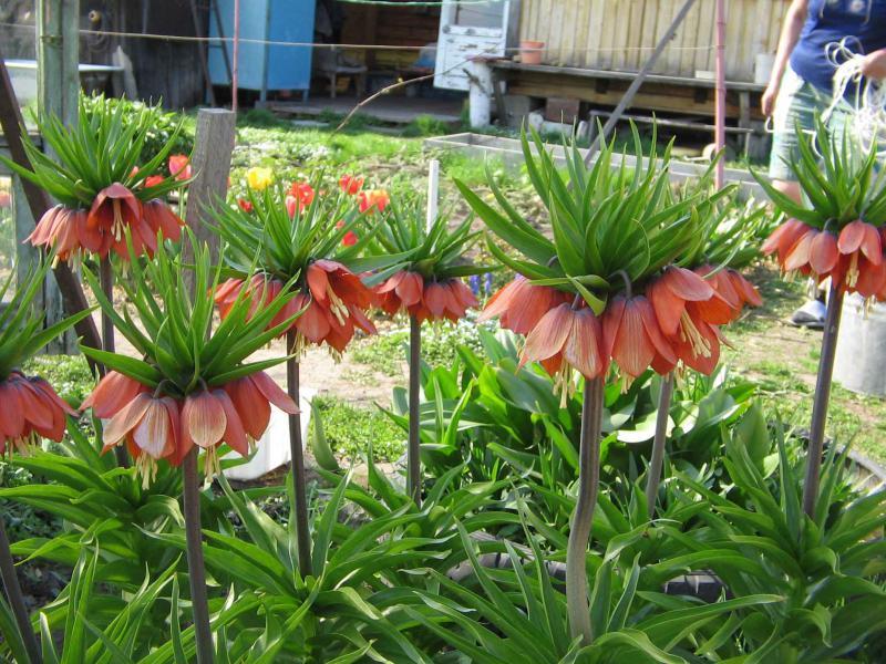 садовые цветы на даче