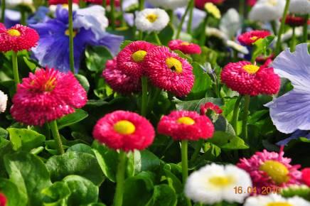 Какие цветы посадить на даче чтобы