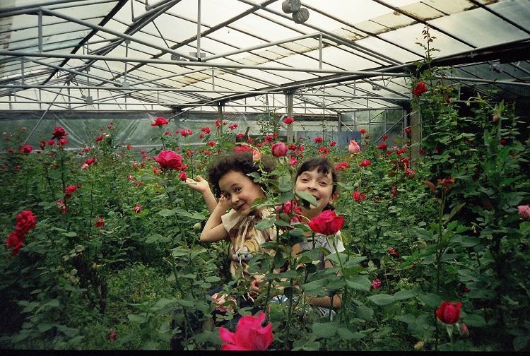 Выращивание роз на продажу в домашних условиях